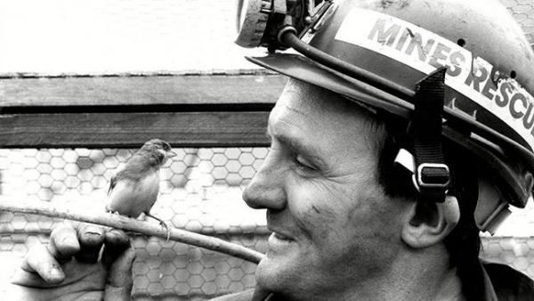 COAL MINER WITH CANARY